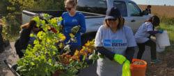 Volunteer Canada Nonprofit Recognition